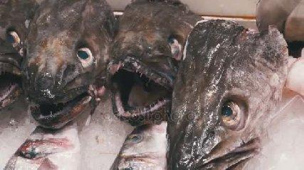 https://www.ragusanews.com//immagini_articoli/13-08-2018/pesce-chilo-chilo-mangime-240.jpg