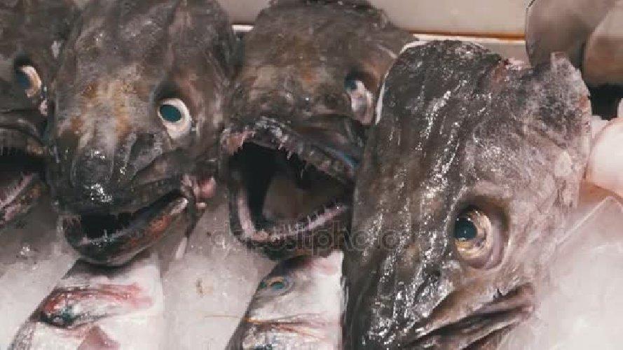 https://www.ragusanews.com//immagini_articoli/13-08-2018/pesce-chilo-chilo-mangime-500.jpg
