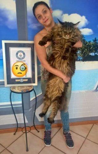 https://www.ragusanews.com//immagini_articoli/13-08-2018/signori-sono-gatto-lungo-mondo-500.jpg