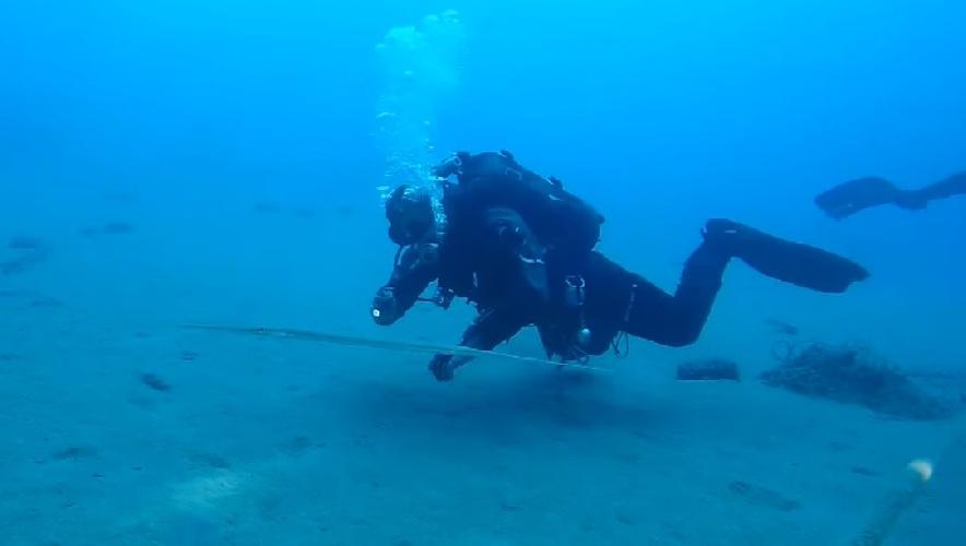 https://www.ragusanews.com//immagini_articoli/13-10-2021/il-pesce-flauto-alieno-nei-fondali-dello-stretto-video-500.jpg