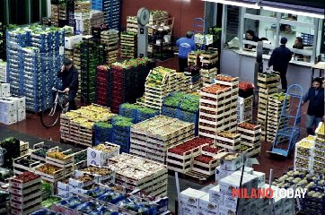 https://www.ragusanews.com//immagini_articoli/13-11-2018/monopolio-imballaggi-mercato-vittoria-indagati-processo-240.jpg