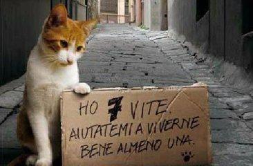http://www.ragusanews.com//immagini_articoli/14-01-2018/gatti-avvelenati-cava-daliga-240.jpg