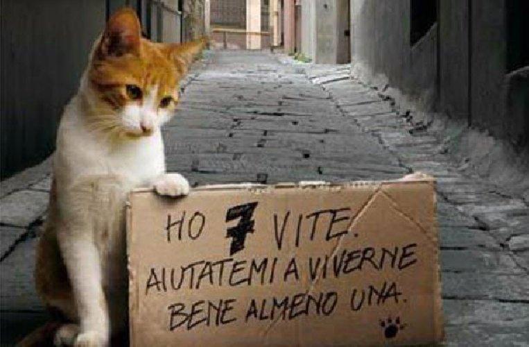 http://www.ragusanews.com//immagini_articoli/14-01-2018/gatti-avvelenati-cava-daliga-500.jpg