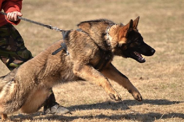 http://www.ragusanews.com//immagini_articoli/14-02-2014/azzannato-da-un-cane-ferito-ispicese-500.jpg