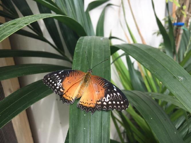 http://www.ragusanews.com//immagini_articoli/14-03-2017/modica-notti-farfalle-500.jpg
