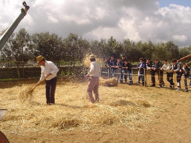 https://www.ragusanews.com//immagini_articoli/14-04-2011/l-aratura-e-la-semina-per-gli-studenti-delle-scuole-iblee-500.jpg