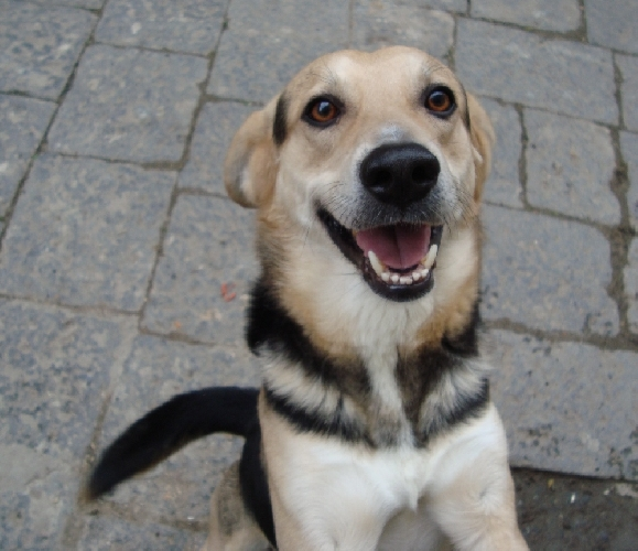 http://www.ragusanews.com//immagini_articoli/14-05-2014/ragusa-il-sindaco-grillino-200-euro-per-chi-adotta-un-cane-500.jpg