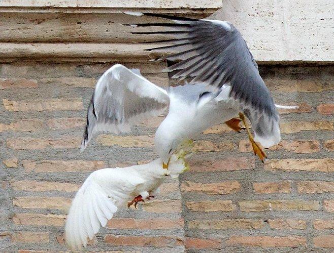 https://www.ragusanews.com//immagini_articoli/14-05-2019/coppia-chiusa-in-casa-terrorizzata-da-uccelli-film-500.jpg