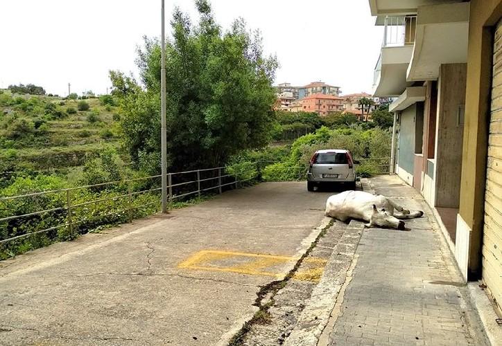 https://www.ragusanews.com//immagini_articoli/14-05-2020/concluse-le-indagini-sulla-mucca-500.jpg