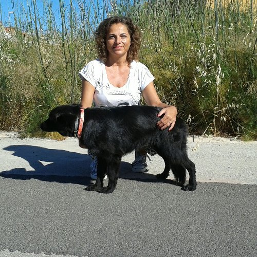 https://www.ragusanews.com//immagini_articoli/14-06-2018/ispica-cani-microchippati-reimmessi-liberta-500.jpg