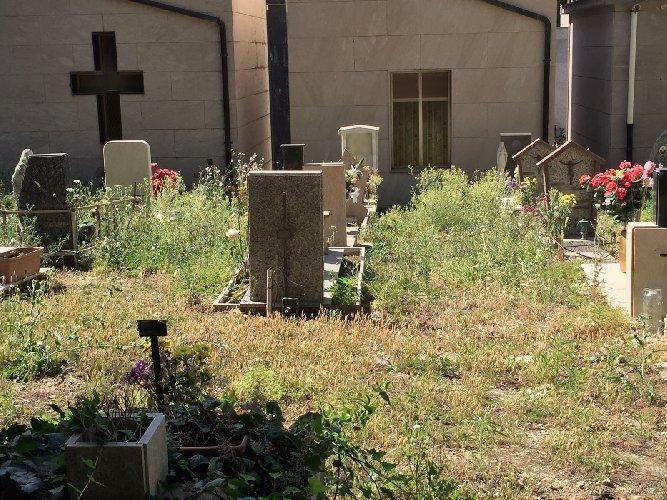 https://www.ragusanews.com//immagini_articoli/14-07-2018/chiaramonte-cimitero-sterpaglie-500.jpg