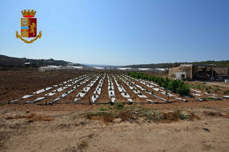 https://www.ragusanews.com//immagini_articoli/14-07-2020/il-25enne-con-la-piantagione-di-droga-a-vittoria-500.jpg
