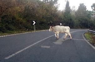 http://www.ragusanews.com//immagini_articoli/14-08-2016/il-sindaco-di-monterosso-autorizza-a-sparare-gli-animali-vaganti-200.jpg