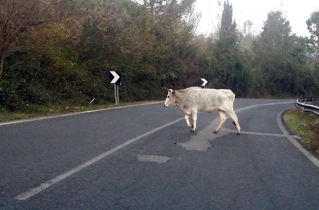 http://www.ragusanews.com//immagini_articoli/14-08-2016/il-sindaco-di-monterosso-autorizza-a-sparare-gli-animali-vaganti-420.jpg