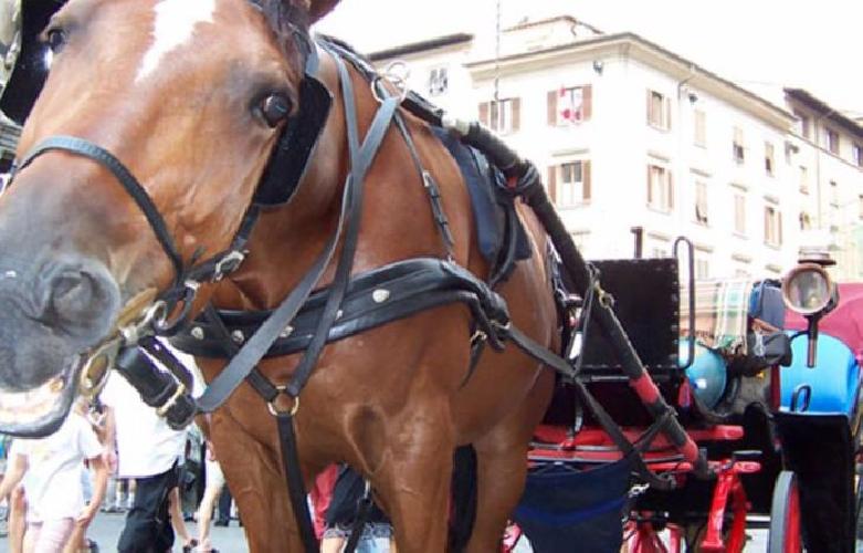 https://www.ragusanews.com//immagini_articoli/14-08-2017/caldo-cavallo-turisti-muore-infarto-500.jpg