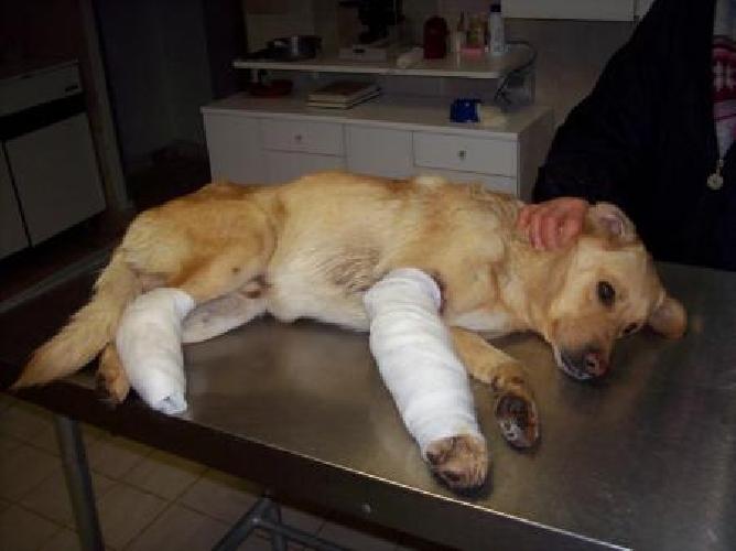 http://www.ragusanews.com//immagini_articoli/14-09-2014/rissa-in-centro-ferito-un-cane-500.jpg