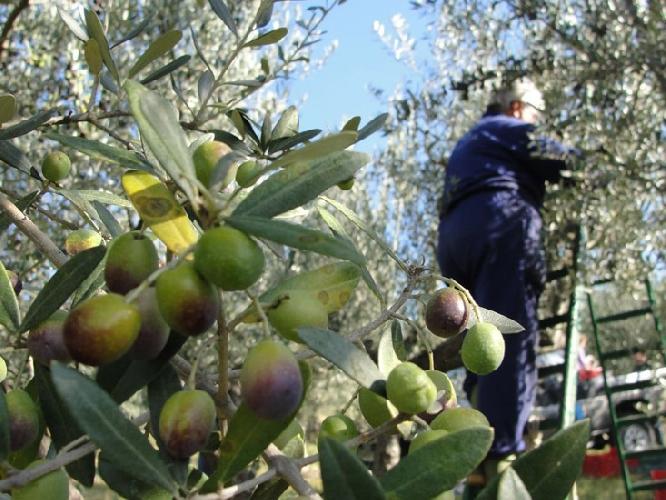 http://www.ragusanews.com//immagini_articoli/14-10-2015/donna-cade-da-una-scala-mentre-raccoglie-olive-operata-500.jpg
