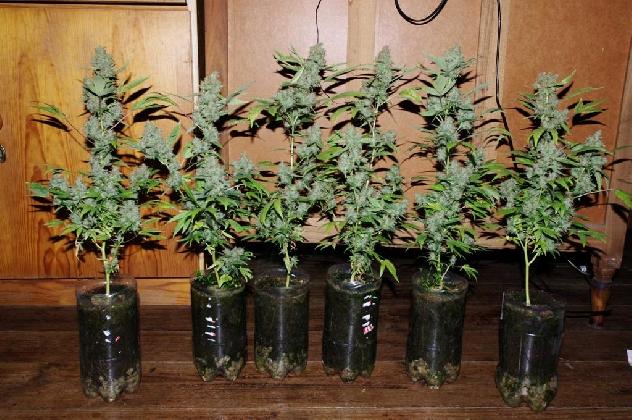 http://www.ragusanews.com//immagini_articoli/14-10-2016/coltivava-marijuana-in-casa-arrestato-21enne-420.jpg
