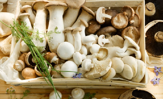 http://www.ragusanews.com//immagini_articoli/14-10-2016/prima-fiera-del-fungo-week-end-di-degustazioni-a-chiaramonte-420.jpg