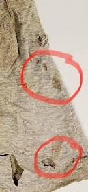 https://www.ragusanews.com//immagini_articoli/14-10-2021/1634193842-i-pantaloncini-di-gioele-mondello-il-papa-daniele-giudicate-voi-1-280.jpg