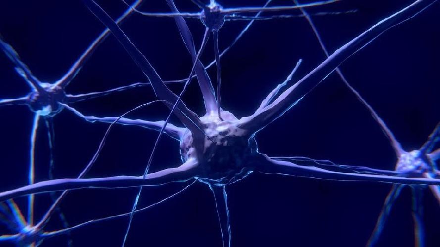 https://www.ragusanews.com//immagini_articoli/14-10-2021/dieta-mind-la-dieta-che-promuove-il-benessere-del-cervello-500.jpg