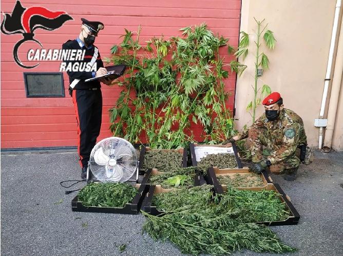 https://www.ragusanews.com//immagini_articoli/14-10-2021/vittoria-contadino-trovato-con-4-6-kg-di-marijuana-500.jpg