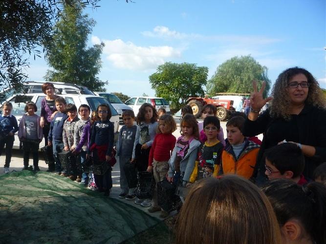 https://www.ragusanews.com//immagini_articoli/14-11-2011/una-scuola-di-ragusa-a-lezione-di-olio-500.jpg