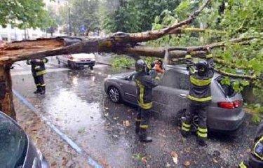 https://www.ragusanews.com//immagini_articoli/14-12-2019/raffiche-di-vento-a-116-km-orari-alberi-sulle-auto-a-palermo-240.jpg