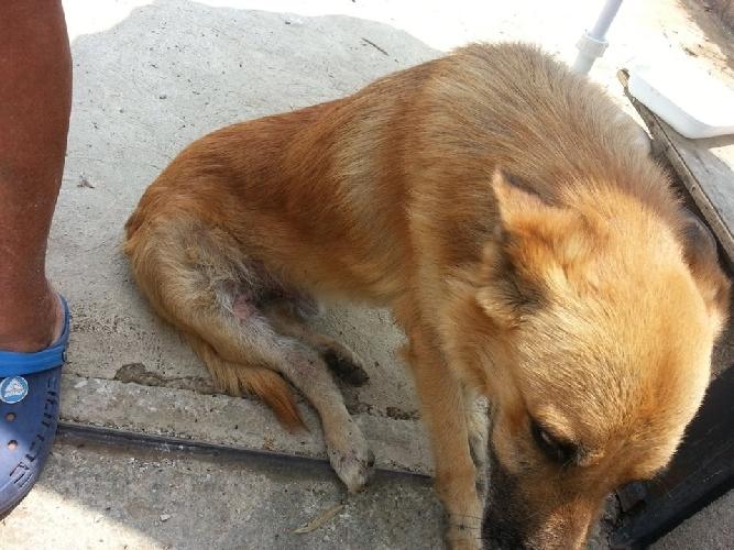 http://www.ragusanews.com//immagini_articoli/15-03-2014/la-replica-sul-caso-dei-cani-rubati-500.jpg