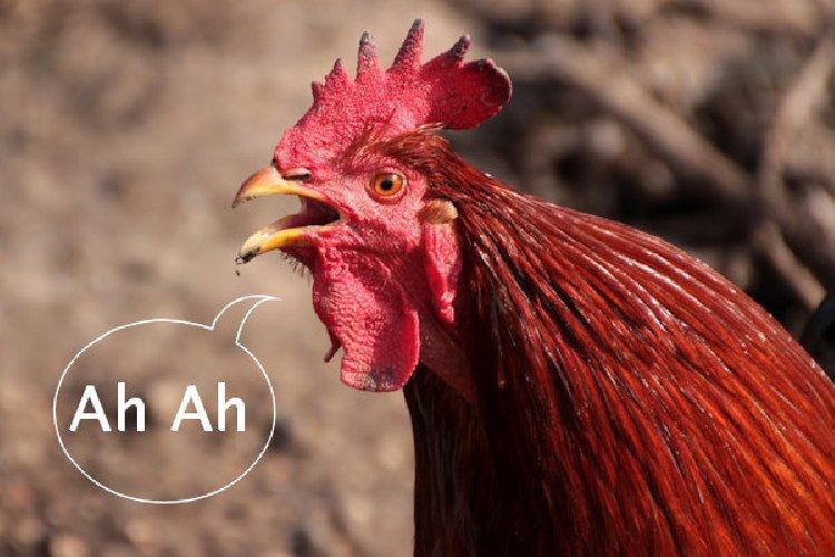 https://www.ragusanews.com//immagini_articoli/15-03-2019/attenti-pollo-trucco-viene-ucraina-500.jpg