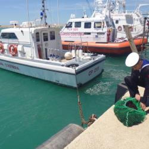 http://www.ragusanews.com//immagini_articoli/15-05-2015/multato-pescatore-di-ricci-500.jpg