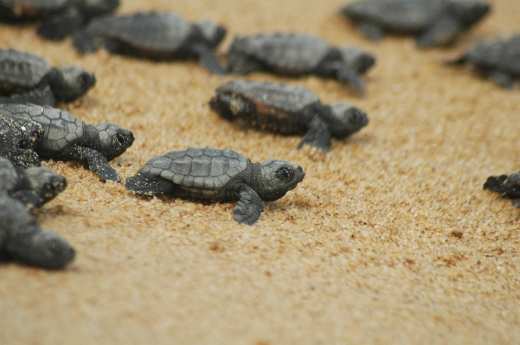 https://www.ragusanews.com//immagini_articoli/15-05-2017/tartaruga-caretta-caretta-liberata-marina-ragusa-500.jpg