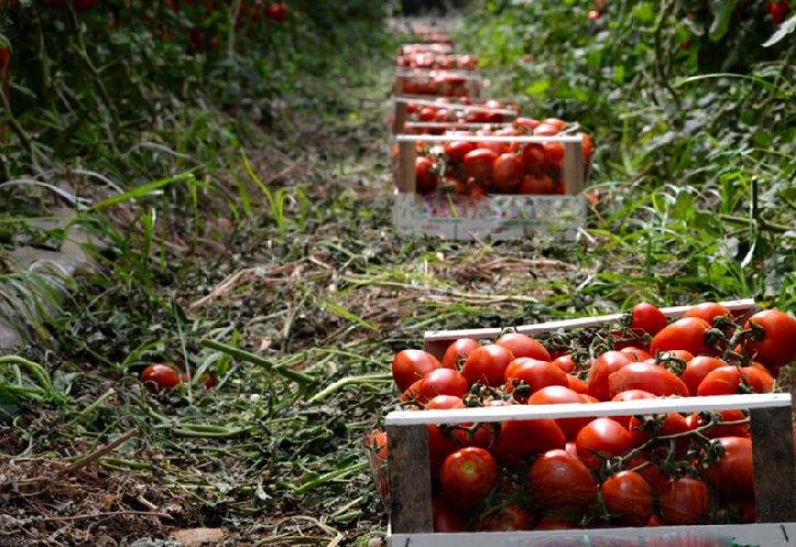 https://www.ragusanews.com//immagini_articoli/15-05-2018/crisi-agricola-affrontarla-convegno-ragusa-500.jpg