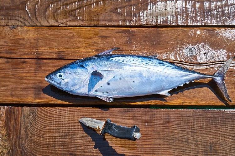 https://www.ragusanews.com//immagini_articoli/15-05-2020/omega-3-perche-inserirli-nella-dieta-500.jpg