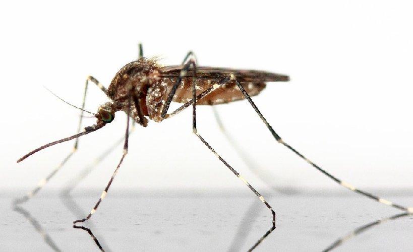 https://www.ragusanews.com//immagini_articoli/15-06-2019/dieta-anti-zanzare-per-tenerle-lontane-cosa-mangiare-500.jpg