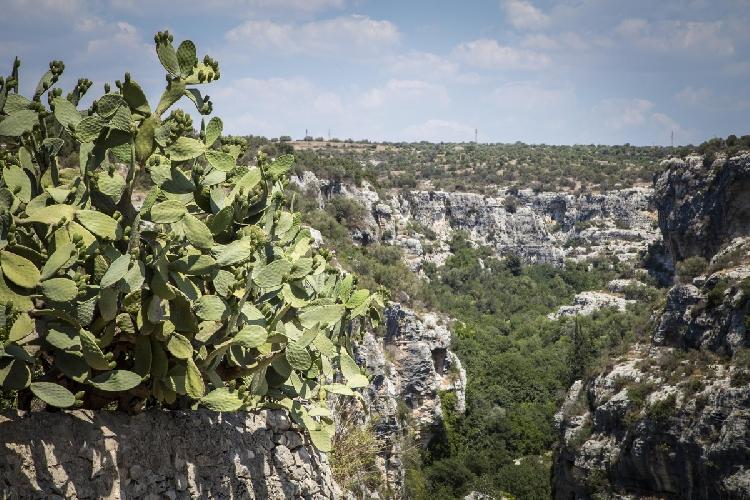 http://www.ragusanews.com//immagini_articoli/15-07-2016/cava-d-ispica-bimbo-scout-precipita-in-una-scarpata-500.jpg