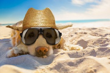 https://www.ragusanews.com//immagini_articoli/15-07-2019/cani-in-spiaggia-a-marina-di-ragusa-dove-240.jpg
