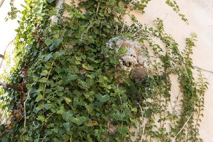 https://www.ragusanews.com//immagini_articoli/15-07-2021/1626366740-ragusa-il-fantasma-della-dama-e-il-castello-invenduto-foto-7-280.jpg