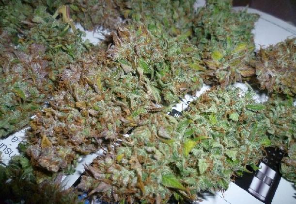 https://www.ragusanews.com//immagini_articoli/15-09-2016/vittoria-arrestato-incensurato-trovato-in-possesso-di-un-kg-di-marijuana-420.jpg