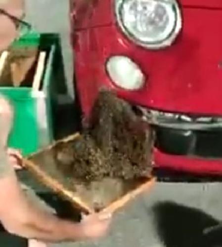 https://www.ragusanews.com//immagini_articoli/15-09-2021/alveare-sul-paraurti-un-apicoltore-risolve-cosi-video-500.jpg