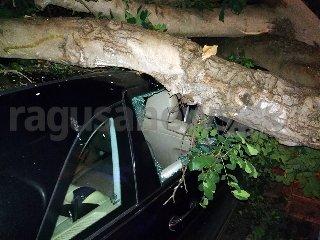 https://www.ragusanews.com//immagini_articoli/15-11-2019/tragedia-sfiorata-albero-di-carrubo-rovina-su-mercedes-video-240.jpg