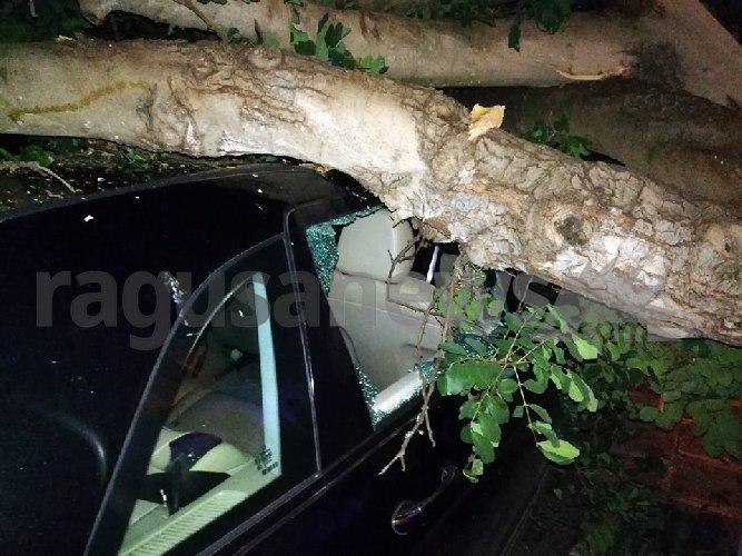 https://www.ragusanews.com//immagini_articoli/15-11-2019/tragedia-sfiorata-albero-di-carrubo-rovina-su-mercedes-video-500.jpg