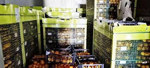 https://www.ragusanews.com//immagini_articoli/16-01-2020/20-mila-kg-di-limoni-turchi-fatevi-una-spremuta-240.jpg
