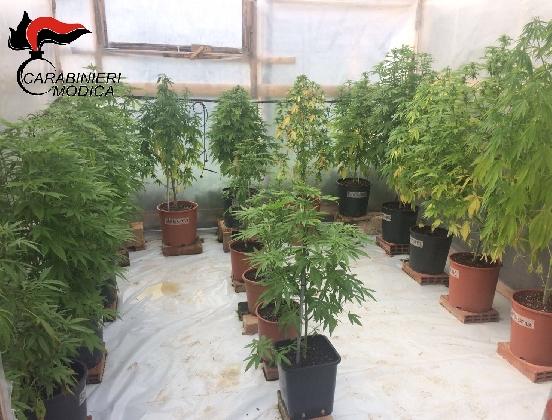 http://www.ragusanews.com//immagini_articoli/16-02-2017/serra-cannabis-arrestato-sciclitano-420.jpg
