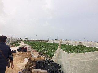 https://www.ragusanews.com//immagini_articoli/16-04-2018/vittoria-chiesto-stato-calamita-dopo-bufera-vento-240.jpg