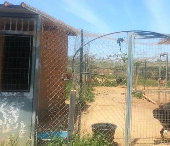 http://www.ragusanews.com//immagini_articoli/16-05-2014/a-vittoria-un-canile-abusivo-su-terreno-comunale-500.jpg