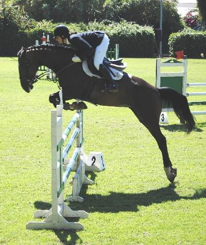 https://www.ragusanews.com//immagini_articoli/16-07-2014/giovani-cavalieri-ragusani-in-evidenza-sui-salti-siracusani-500.jpg
