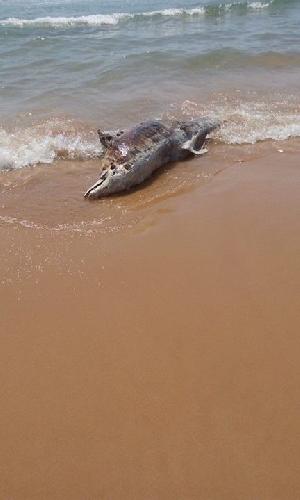 http://www.ragusanews.com//immagini_articoli/16-07-2015/spiaggia-un-delfino-ad-arizza-500.jpg