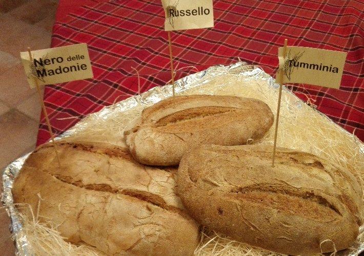http://www.ragusanews.com//immagini_articoli/16-11-2016/grani-antichi-siciliani-pane-pane-500.jpg