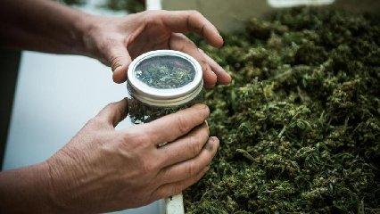 https://www.ragusanews.com//immagini_articoli/17-01-2019/cannabis-legale-ragusa-anche-convegno-240.jpg